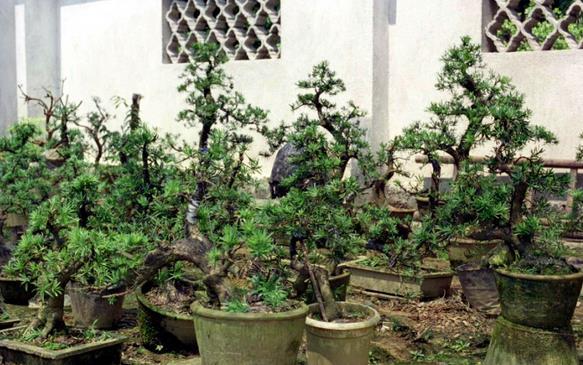 大树瓜子手工制作图片